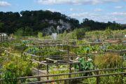 jardin-d-eau