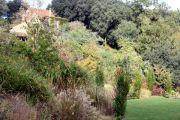 grasses-border