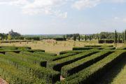box-hedges