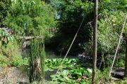 chateau-pond
